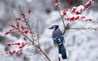 Snowbird blog