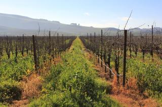 Vineyard-1342588-639x426